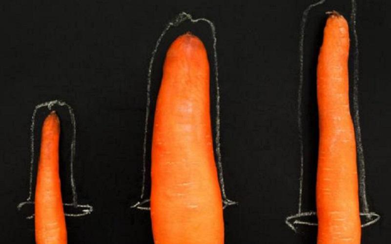 penis masculin mediu